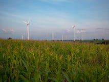 Wind turbines farm in corn field stock image