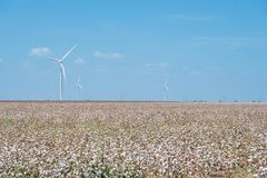 Wind turbines farm on cotton field at Corpus Christi, Texas, USA Royalty Free Stock Photos