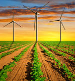 Wind turbines on field Stock Photo