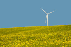 Wind turbines in a field of yellow flowers Royalty Free Stock Photo