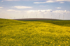 Wind turbines in a field of yellow flowers Stock Photo