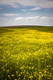 Wind turbines in a field of yellow flowers Royalty Free Stock Photos