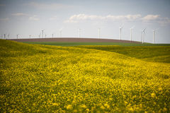 Wind turbines in a field of yellow flowers Stock Images
