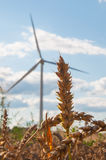 Wind turbines in the fields Stock Photography