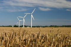 Wind turbines in fields Royalty Free Stock Image
