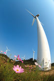 Wind turbines generating electricity and flower Stock Image