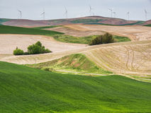 Wind turbines on the hill tops with wheat fields Royalty Free Stock Image