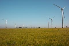 Wind turbines on horizon of barley field Royalty Free Stock Photo
