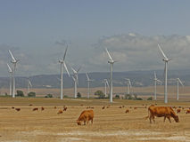 Wind turbines and landscape bulls. Stock Image