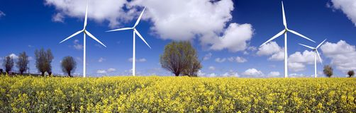 Wind Turbines in Meadow. Windmills or wind turbines, in field of yellow flowers, blue sky and clouds, trees on horizon Royalty Free Stock Image