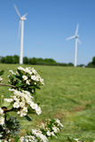 Wind turbines and nice flower Stock Photography