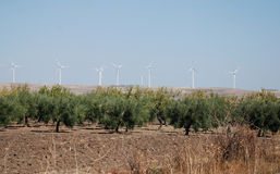Wind Turbines and Olive Trees Stock Photography