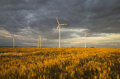 Wind turbines, pure energy,windmills in the fields Royalty Free Stock Images