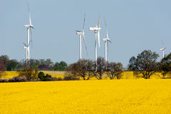 Wind turbines and rape field Royalty Free Stock Photos