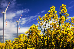 Wind turbines on the flowers field. With sky in the background royalty free stock photography