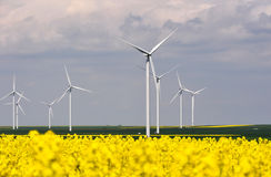Wind turbines in rapes field Royalty Free Stock Image