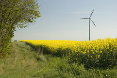 Wind turbines and rapeseed fie Stock Image