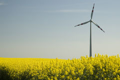 Wind turbines and rapeseed fie Stock Photography