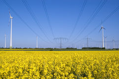 Wind turbines and rapeseed field royalty free stock photo