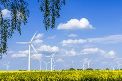 Wind turbines in a rapeseed field with blue sky. And clouds Stock Photos