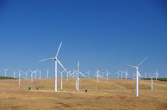 Wind Turbines. Some wind turbines on the grassland Stock Photography