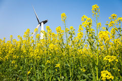 Wind turbines in spring Royalty Free Stock Photos