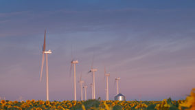Wind turbines and sunflowers Royalty Free Stock Images