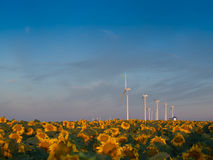 Wind turbines and sunflowers Royalty Free Stock Image