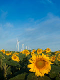 Wind turbines and sunflowers Royalty Free Stock Photos
