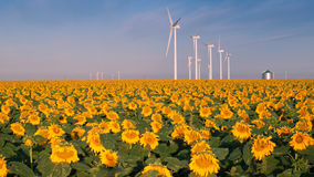 Wind turbines and sunflowers Royalty Free Stock Photo