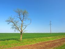 Wind-turbines and a tree on a green field Royalty Free Stock Images