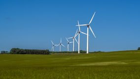 6 wind turbines on a wheat field in jun Royalty Free Stock Image