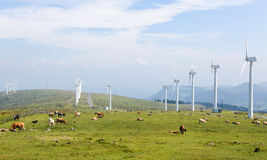 Wind turbines on a wind farm in Galicia, Spain Royalty Free Stock Image