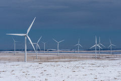 Wind Turbines in Winter Wheat fields Royalty Free Stock Image