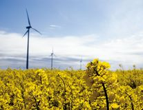 Wind turbines, yellow field. Several wind turbines standing in a field of yellow rape-seed Stock Photography