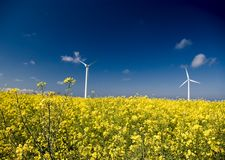 Wind turbines, yellow field. royalty free stock image