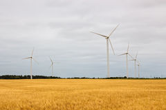 Wind turbines in a yellow field Stock Images