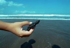 Wind turtles Stock Photo