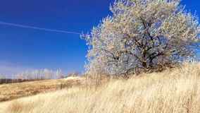 Wind in the Ukrainian steppes. Lonely tree, grass and blue sky; HD timelapse stock footage