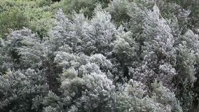 Wind und Bäume stock video footage