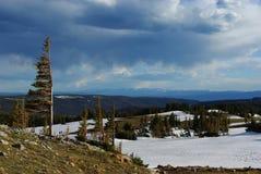 Wind verbogene Bäume, schneebedeckte hohe Ebenen und Gebirgsketten, Medizin-Bogen-Berge, Wyoming stockbild