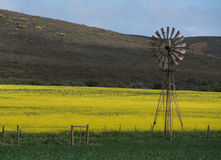 Wind water pump and Canola field Royalty Free Stock Images