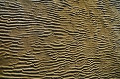 Wind, water and sand. The wind and the water have made strange structures with the sand in the tides. Summer of the day stock images