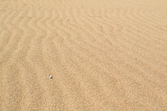 Wind waves in the sand on the beach. The sand on a pristine beach, shaped by the sea breeze, softly illuminated a cloudy day. Delta of the river Llobregat Stock Photos