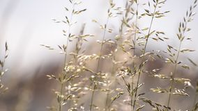 Wind on wild plant Royalty Free Stock Photo