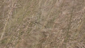 Wind in wilderness stock footage