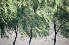 Wind willows Stock Photos