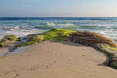 Windansea Beach, La Jolla, CA. Mossy rocks on the shore of Windansea Beach in La Jolla, California royalty free stock photography