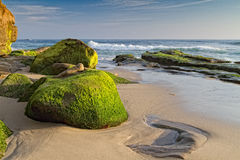Windansea Beach, La Jolla, CA. Mossy rocks on the shore of Windansea Beach in La Jolla, California royalty free stock photos