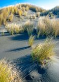 Windblown Dune Grass Shadows royalty free stock photos